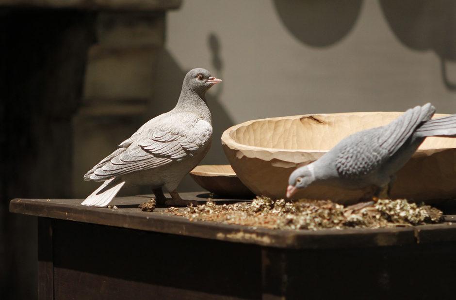 Aschenputtel Tauben